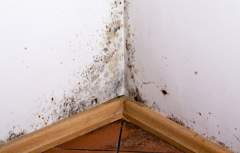 5 Tips for Preventing Toxic Mold Syndrome