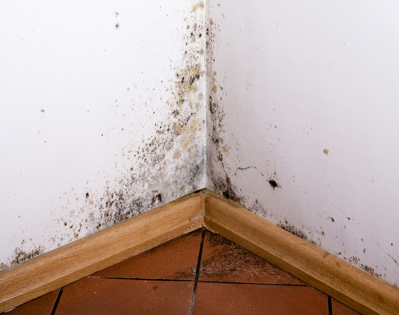 Preventing toxic mold syndrome everdry toledo - What to do about mold ...