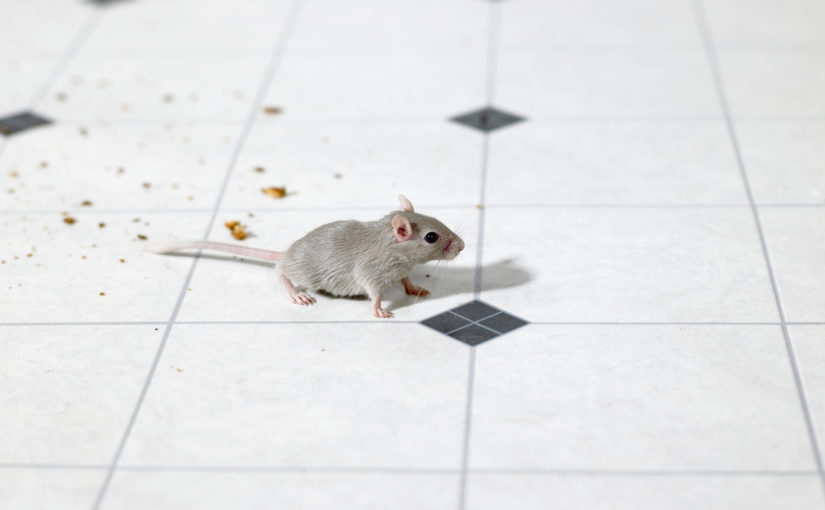A mouse stands next to crumbs on a kitchen floor.