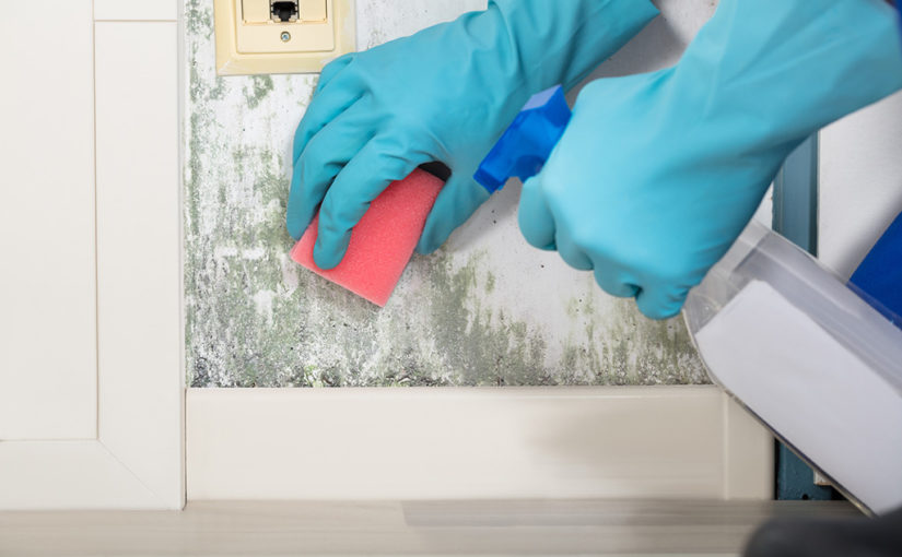 Person Cleaning Mold Off Wall With A Sponge And Spray Bottle While Wearing Gloves