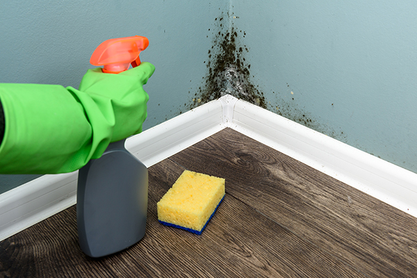 A gloved hand holds a spray bottle aimed at mold growing in the corner of a room.