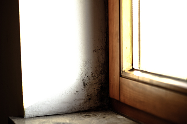 A house with mold near a window due to unresolved water damage